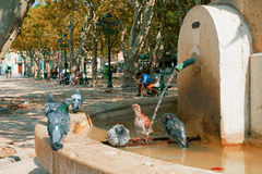 Het drinken van de duif van een fontein Stock Afbeeldingen
