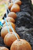 Het drinken van de kokosnoot royalty-vrije stock fotografie