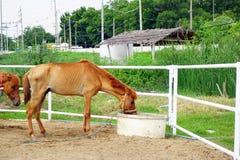 Het drinkwater van het paard royalty-vrije stock afbeeldingen