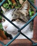 Het droevige gezicht van de kattendraad stock afbeeldingen