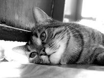Het droevige kat leggen Royalty-vrije Stock Afbeeldingen