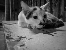 het droevige kat leuke zwart-wit kijken Royalty-vrije Stock Fotografie