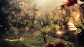 Het droge bladeren vallen stock footage