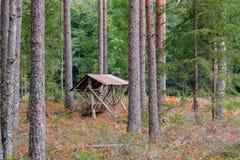 het droge bos van de pijnboomboom royalty-vrije stock foto's