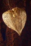 Het droge Chinese fruit van de Lantaarn Royalty-vrije Stock Afbeeldingen