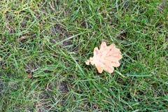 Het droge gele blad viel op het groene gras Ð  utumn Stock Afbeeldingen