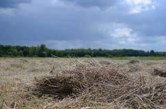 het droge, gemaaide gras ligt in het gebied onder de donkere stormachtige hemel royalty-vrije stock foto's