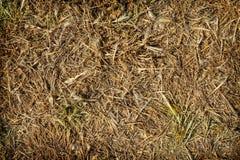 Het droge gras Stock Afbeelding