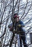 Het droge snoeien die van bomen door een mens met een kettingzaag, zich op een mechanisch platform bevinden Royalty-vrije Stock Afbeelding