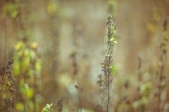 Het droge weiland van het grasgebied binnen Royalty-vrije Stock Afbeeldingen
