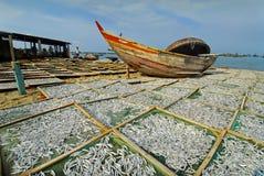 Het drogen van ansjovissen bij een visserijdorp Stock Afbeelding