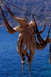 Het drogen van de octopus in de zon Stock Fotografie