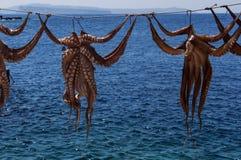 Het drogen van de octopus in de zon Stock Foto