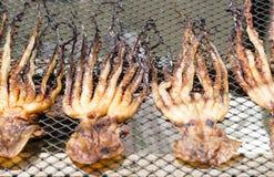 Het drogen van pijlinktvis op netto Royalty-vrije Stock Foto
