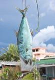 Het drogen van vissen met zonlicht Stock Afbeelding