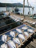 Het drogen van vissen op het pijler visserijdorp Stock Afbeeldingen