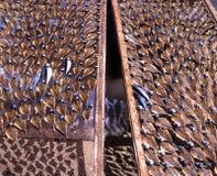 Het drogen van vissen in Portugal Stock Foto