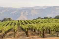 Het druivenlandbouwbedrijf van Napa-Vallei royalty-vrije stock afbeelding
