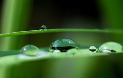 Het druppeltje van het water met bezinning over blad Royalty-vrije Stock Foto