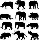 Het duel van het dier: Olifanten en rinocerossen Stock Afbeeldingen