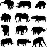 Het duel van het dier: Olifanten en rinocerossen Stock Fotografie