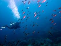 Het duiken bij het Overzees o Cortez Baja Mexico Stock Afbeelding