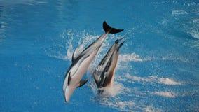 Het duiken dolfijnen Royalty-vrije Stock Foto's