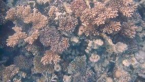 Het duiken Egypte rode overzeese vissen en koralen stock video