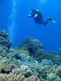 Het duiken in het Blauw stock foto's