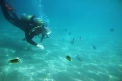 Het duiken in het Rode Overzees Stock Afbeeldingen