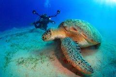 Het duiken in het Rode Overzees Stock Foto
