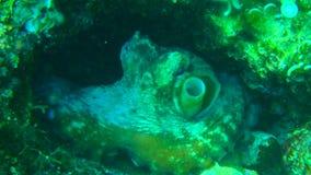 Het duiken in Kroatië stock afbeeldingen