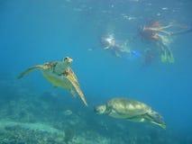 Het duiken met schildpadden Stock Afbeeldingen