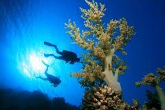 Het duiken op koraalrif stock foto