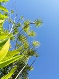 Het duiken in palmen stock afbeelding