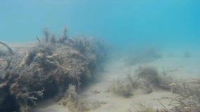 Het duiken rond diverse zeevissen dichtbij Kroatisch zandig strand stock video