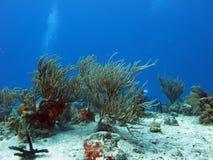 Het duiken in tropische overzees Royalty-vrije Stock Afbeeldingen