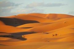 Het duin en de kamelen van de zandwoestijn in de Sahara bij zonsondergang Royalty-vrije Stock Foto