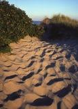 Het Duin van het strand Stock Afbeeldingen