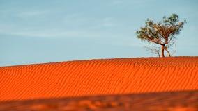 Het duin van het woestijnzand stock afbeeldingen