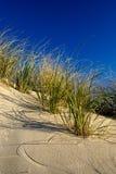 Het Duin van het zand Stock Fotografie