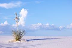 Het Duin van het zand bij Wit Zand Stock Fotografie
