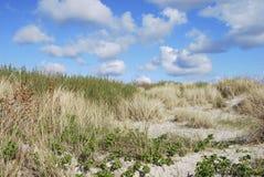 Het Duin van het zand - Het Gebied van de Noordzee Stock Fotografie