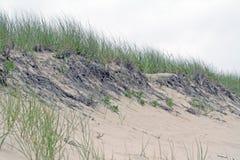 Het duin van het zand met strandgras Stock Foto