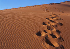 Het duin van het zand in woestijn Royalty-vrije Stock Afbeelding