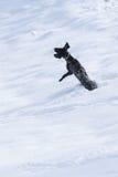 Het Duitse shepard spelen met sneeuwbal royalty-vrije stock foto's