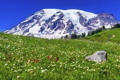 Het duizendknope Indische Paradijs van Penseelwildflowers zet Rainier Nat op stock afbeeldingen