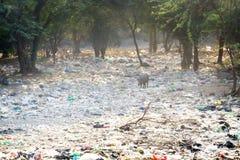 Het dumpen van het bosje van de huishoudelijk afvaln acacia, India royalty-vrije stock afbeelding