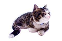 Het Dutje van de kat Stock Foto