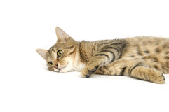 Het dutje van de kat Royalty-vrije Stock Afbeelding
